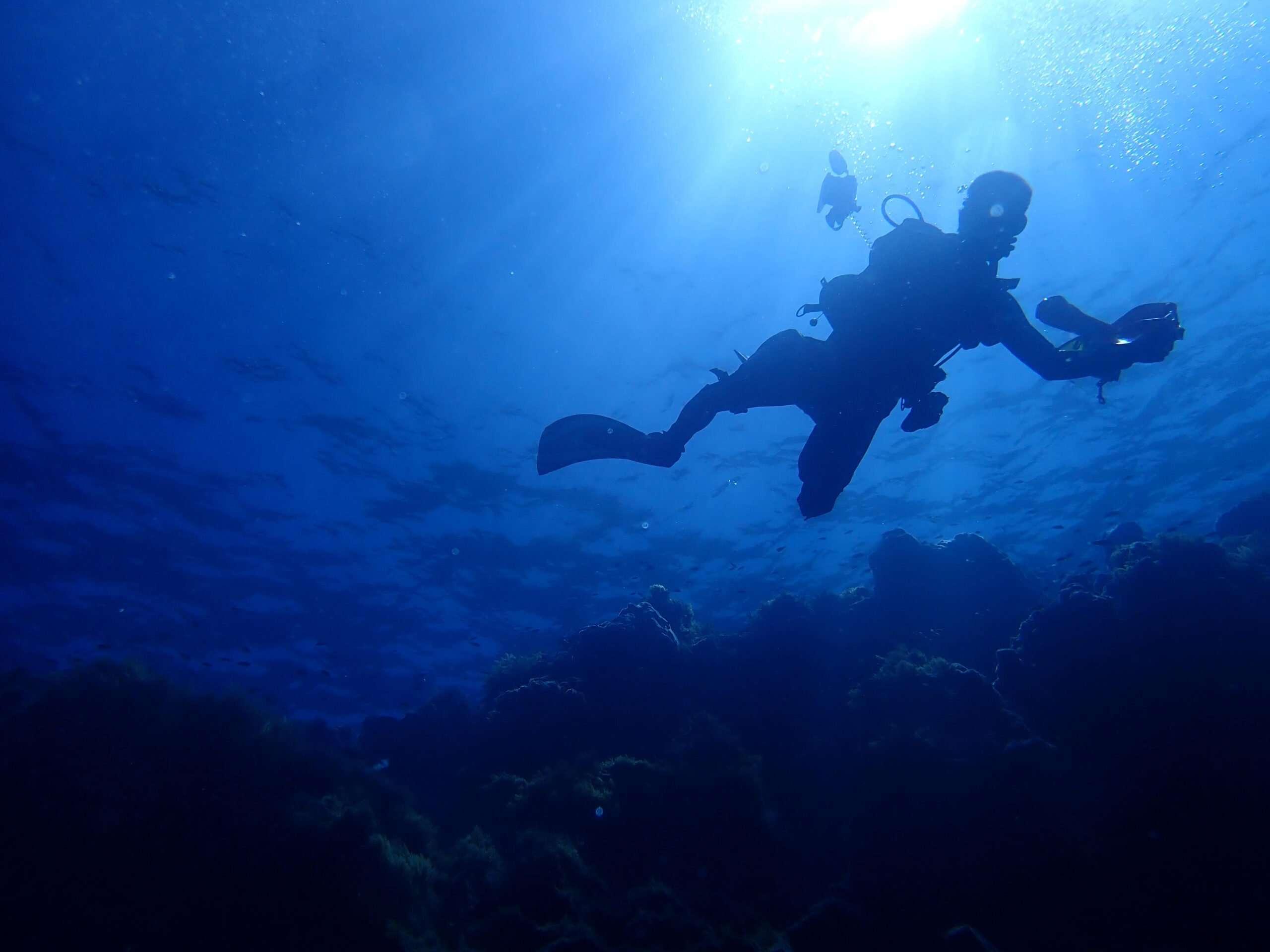 Discovering the wonderful underwater biodiversity