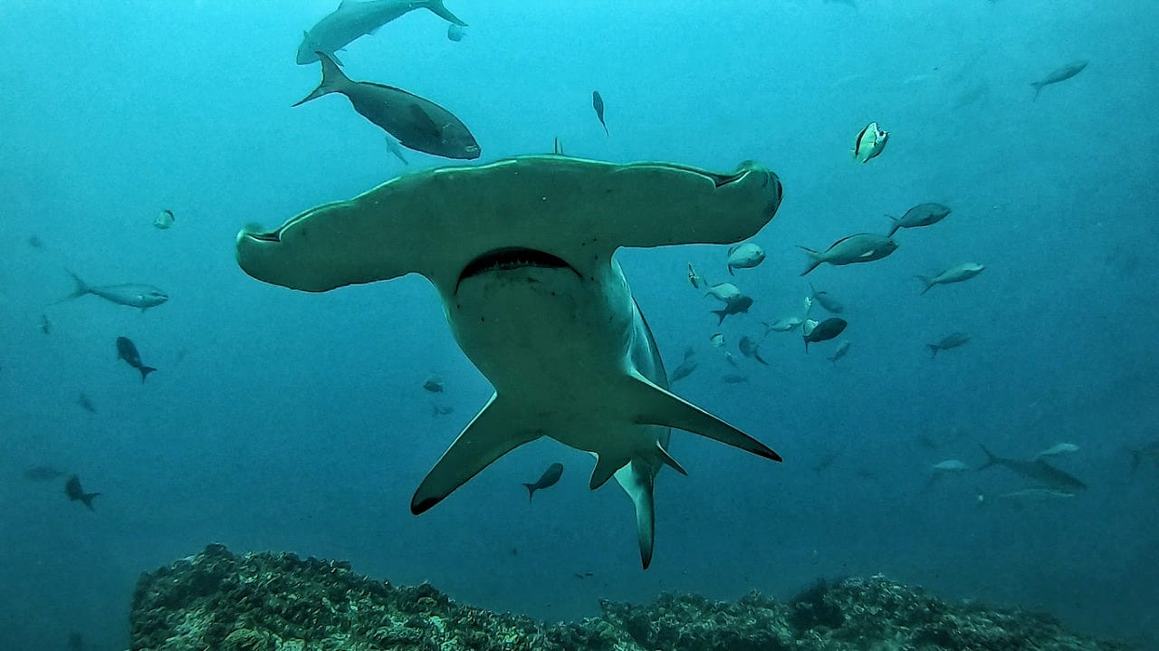 The Secret Life of the Sharks