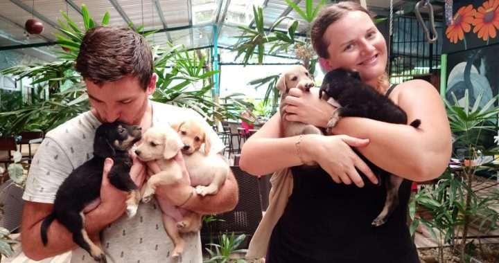 organización de rescate de perros y gatos