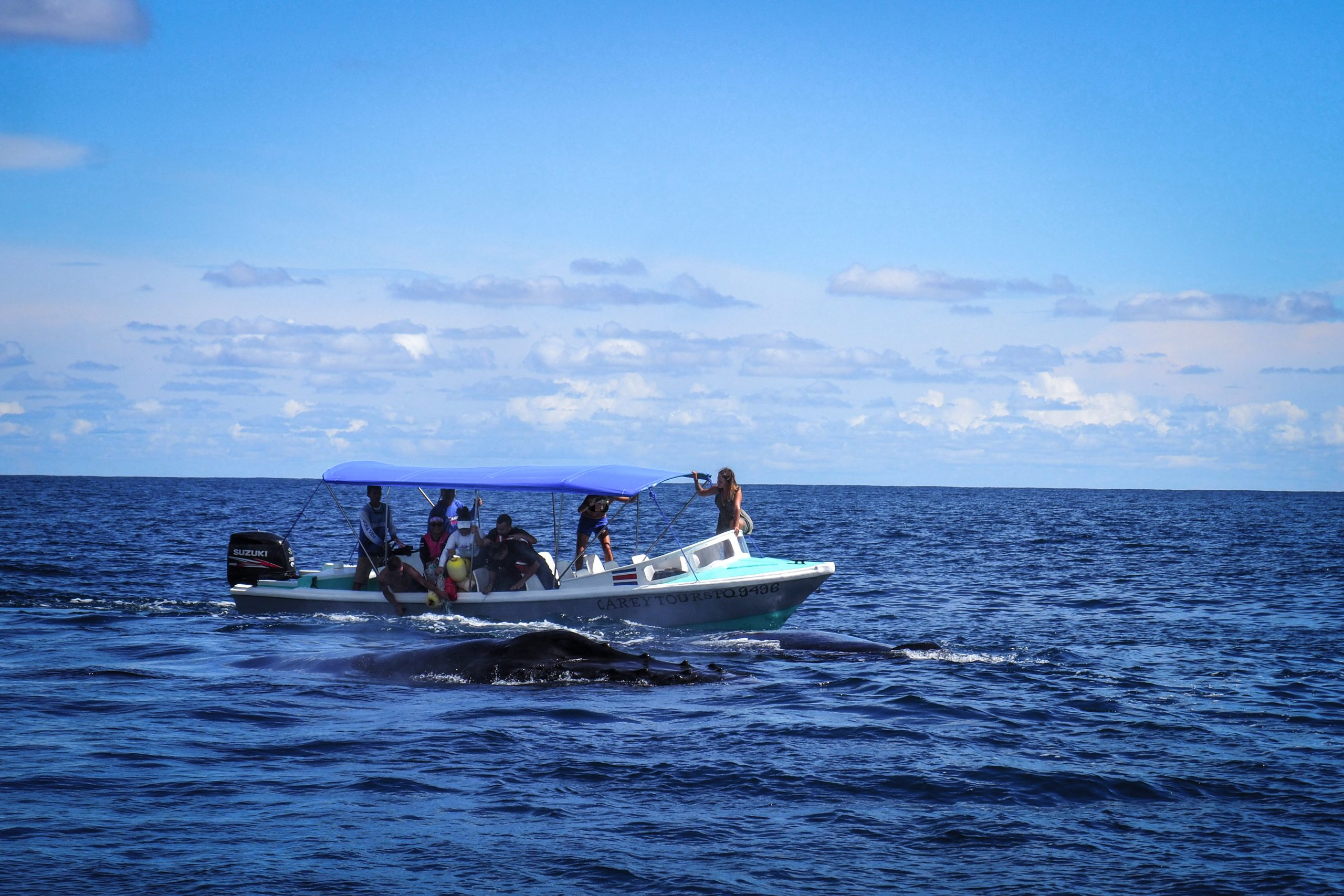 """""""Entangled in Costa Rica"""" A Documentary about whales rescue"""