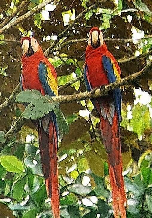 Sierpe Mangrove Boat Tour Costa Rica 10