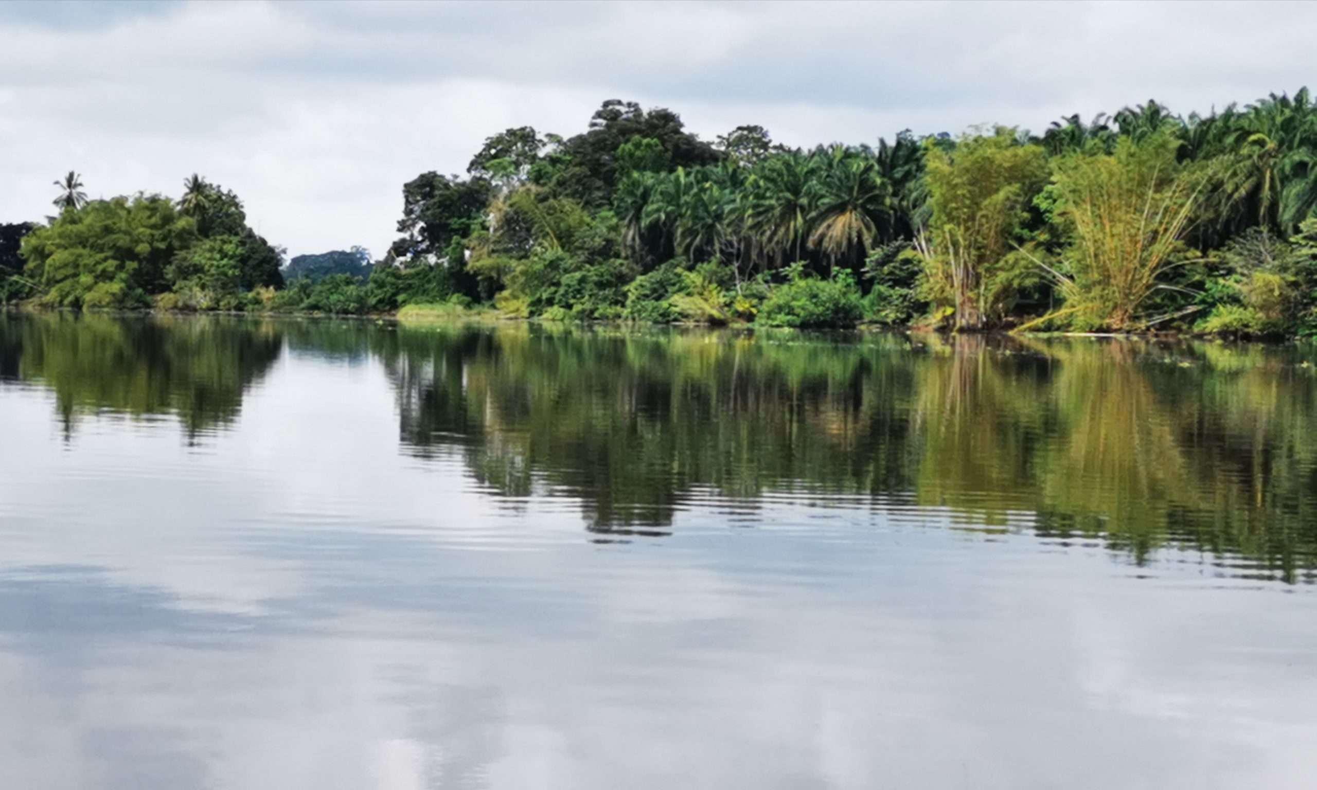 Sierpe Mangrove Boat Tour Costa Rica