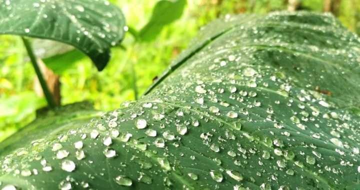 The rain on a leaf