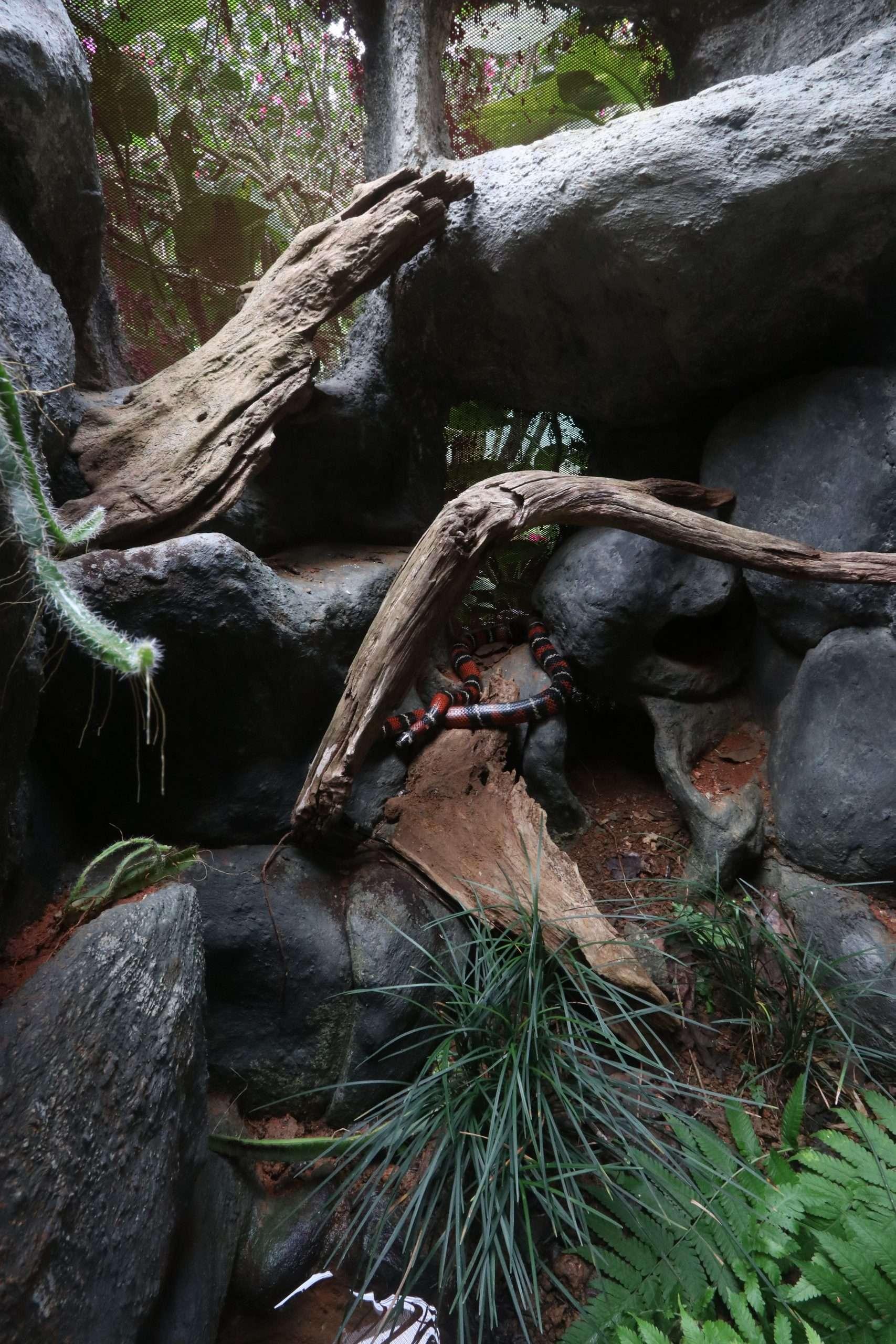 Die Gehege im Reptilandia-Park: Tierfreundlich und modern