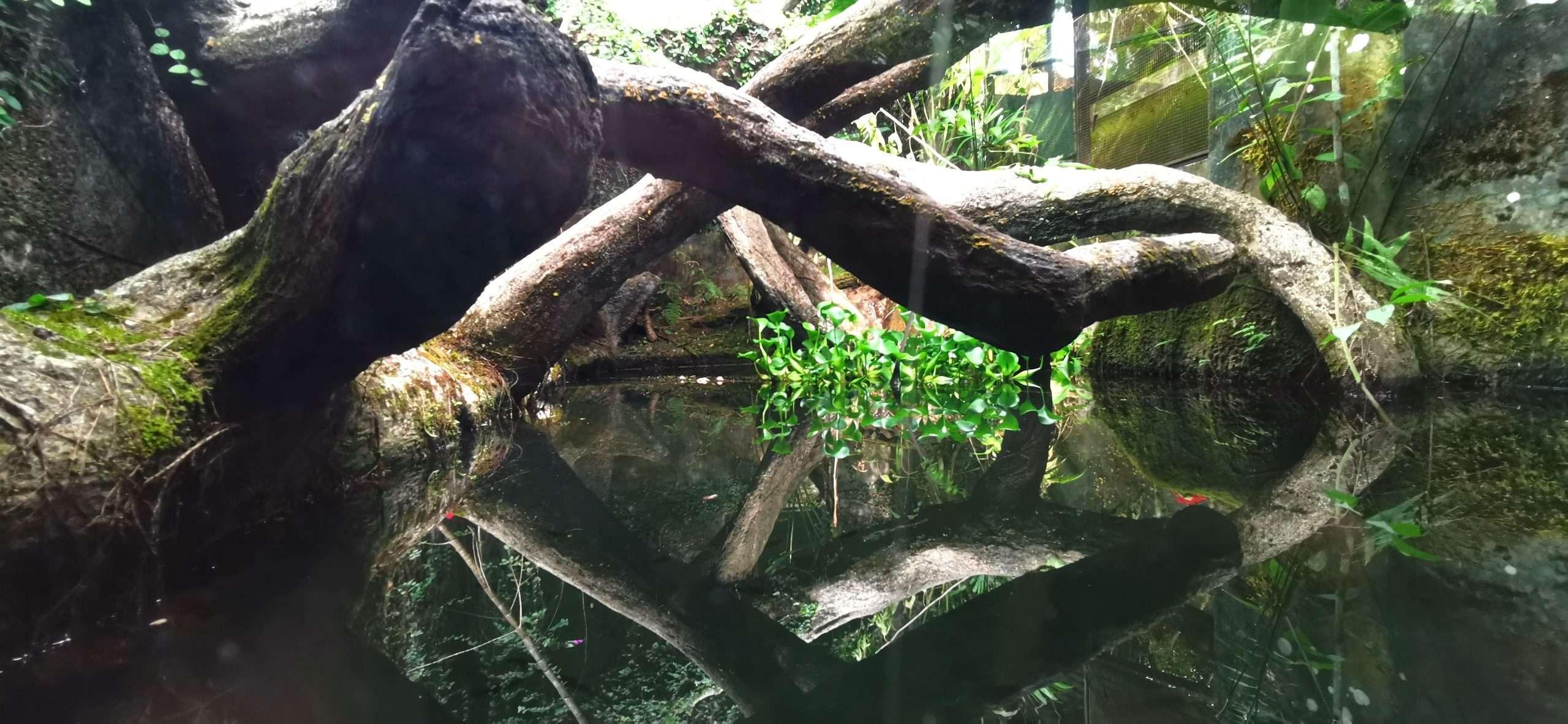 Naturalistic vivariums at Parque Reptilandia 1