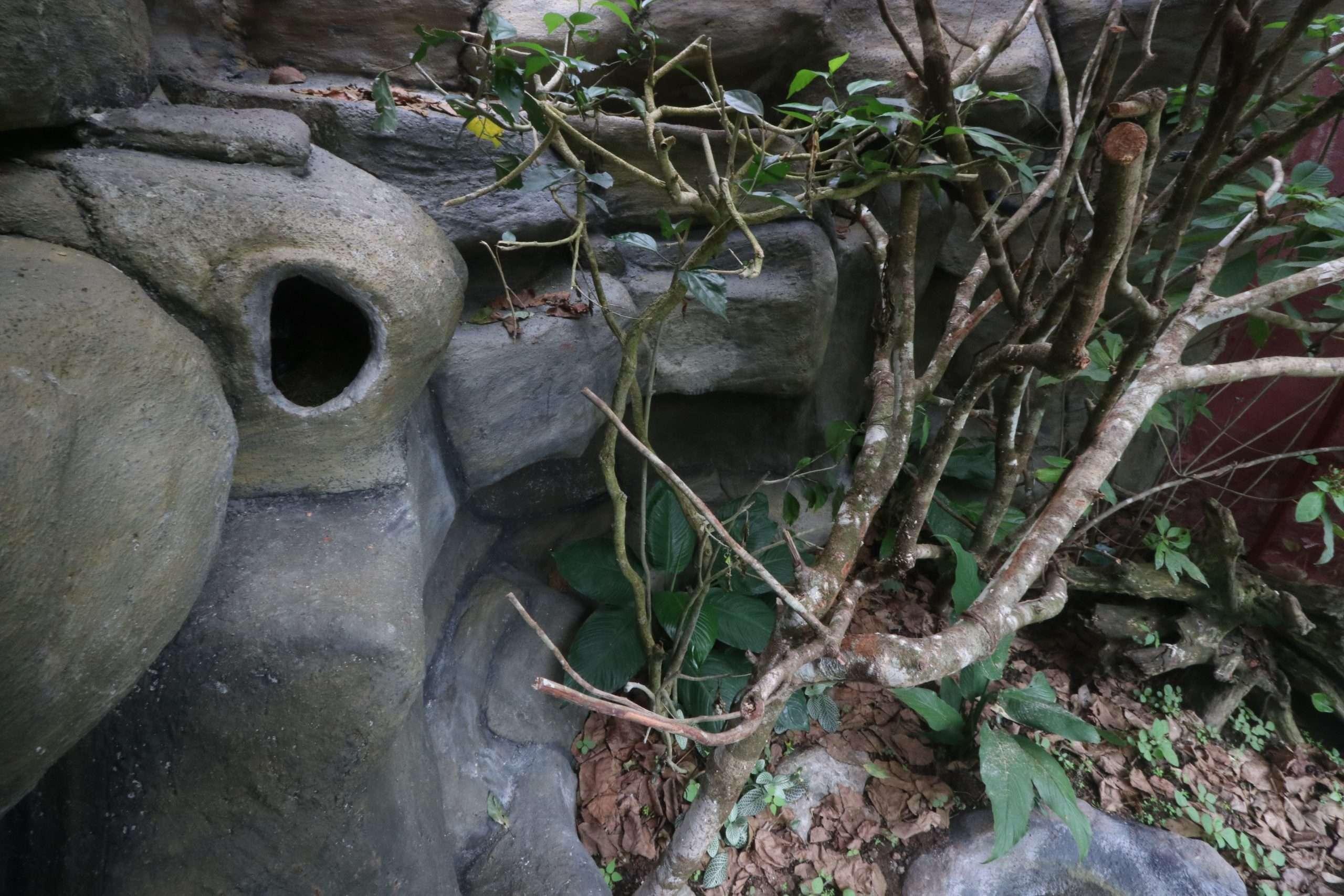 Naturalistic vivariums at Parque Reptilandia 2