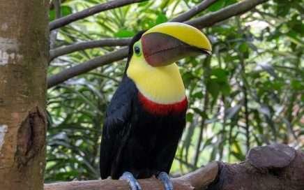 ¿Cuál de los tótems de animales de Costa Rica le representa mejor? 1