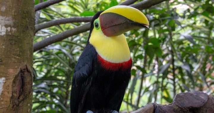 ¿Cuál de los tótems de animales de Costa Rica le representa mejor? 5