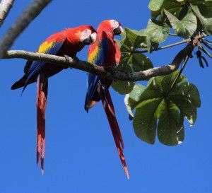 Rio Sierpe Manglar Tour