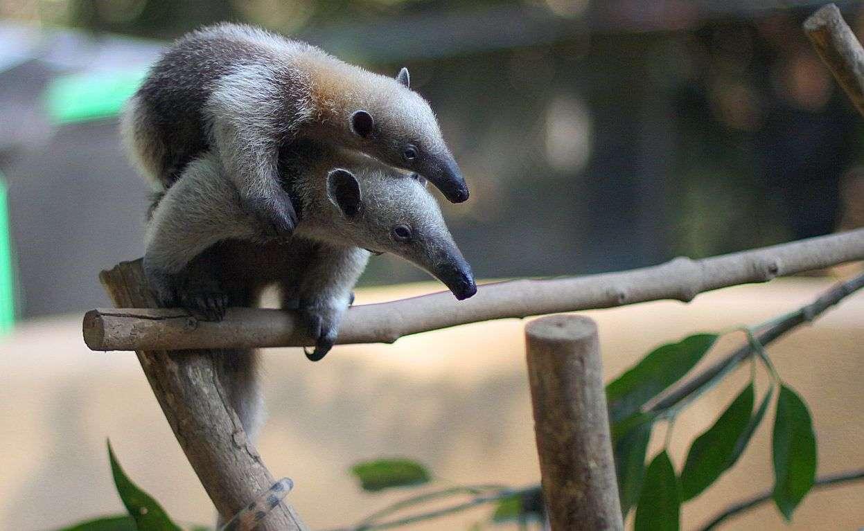 Villas Alturas Wildlife Sanctuary