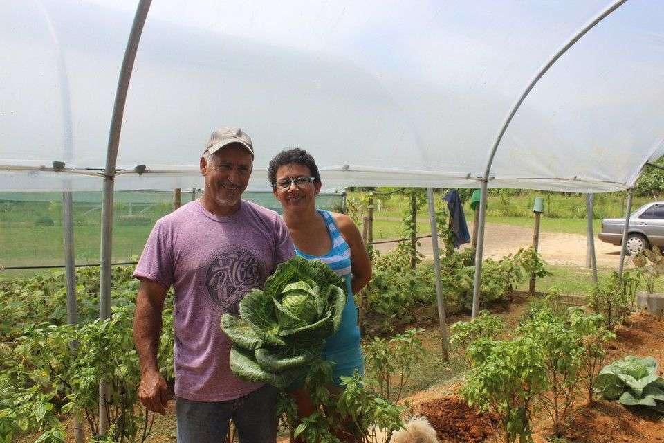 The Varela Family Sells Healthy organic greens at Uvita's farmers' market