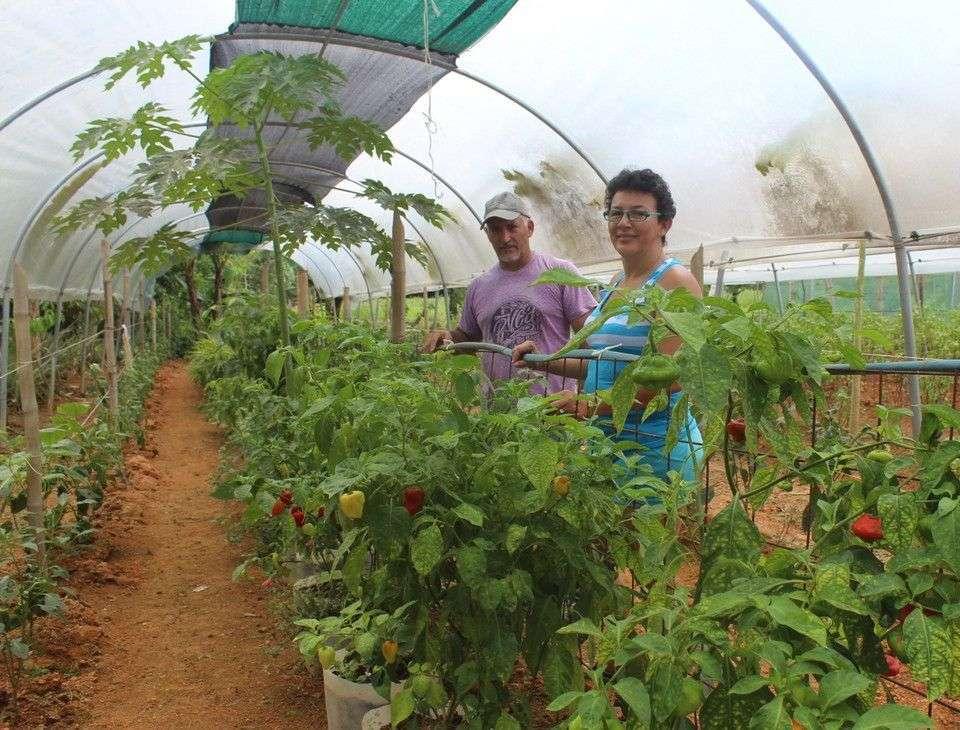 Ellos venden Salud en la Feria de Uvita con sus vegetales orgánicos