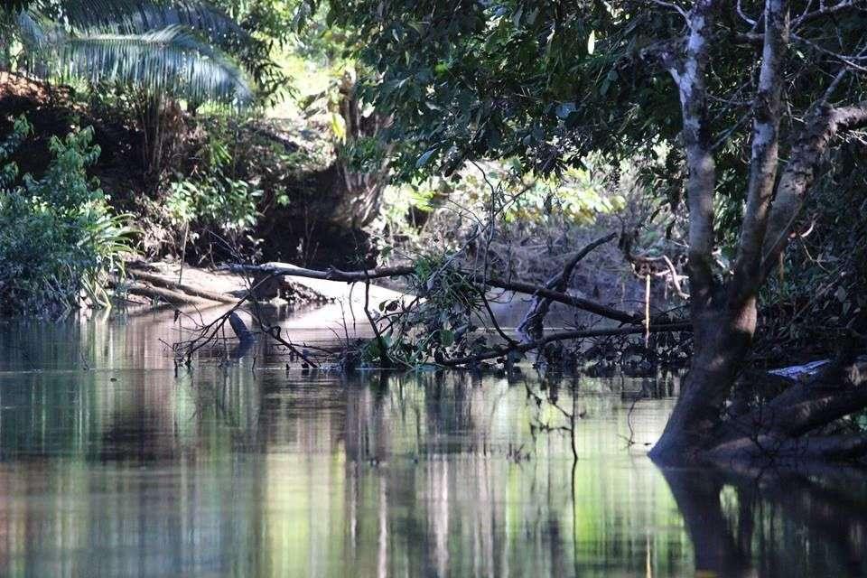 Wildlife Mangrove Tour on the Osa Peninsula Sierpe River
